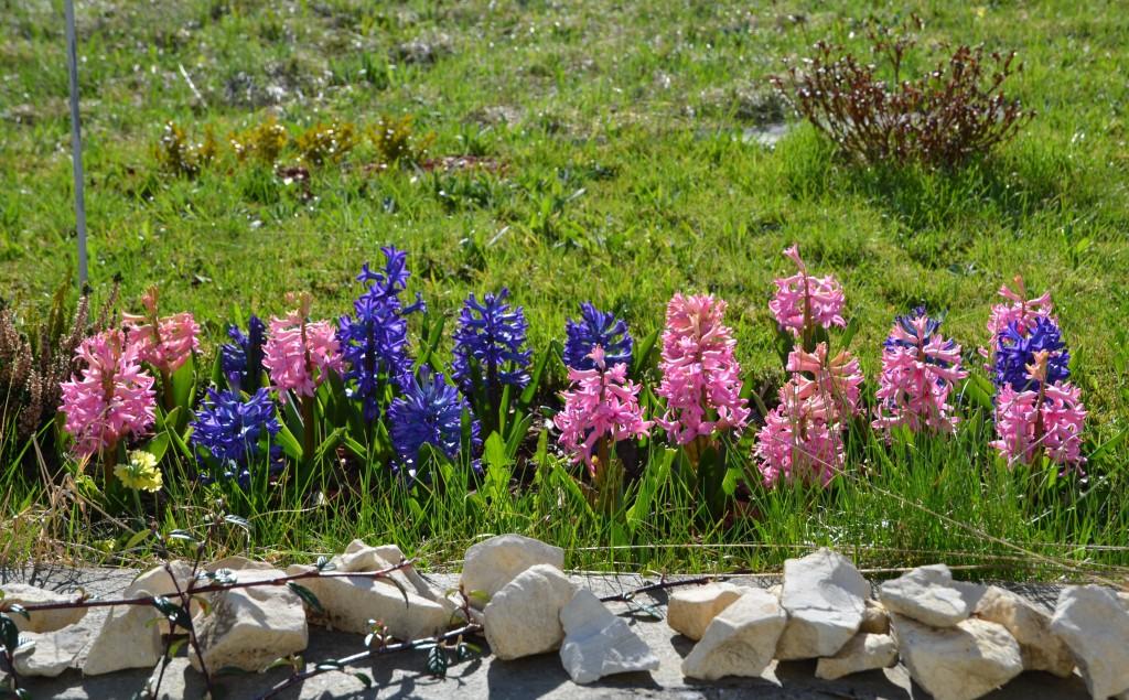Noch einige von meinen jetzigen Frühlingsboten...so schöne Farben.