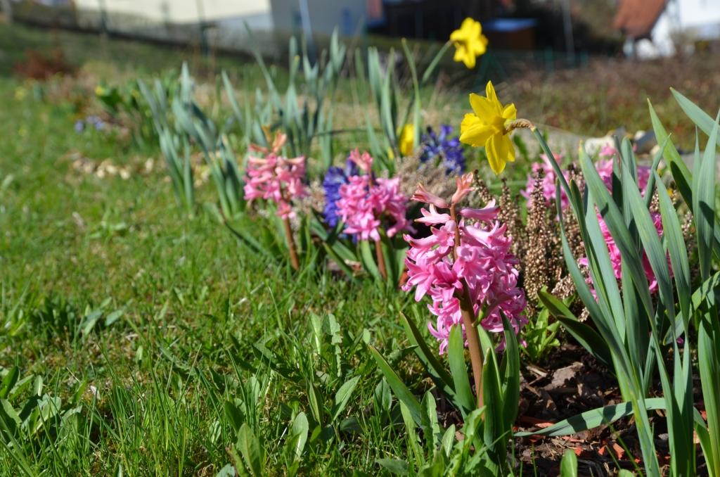 Bunter Mix von Frühlingsblumen