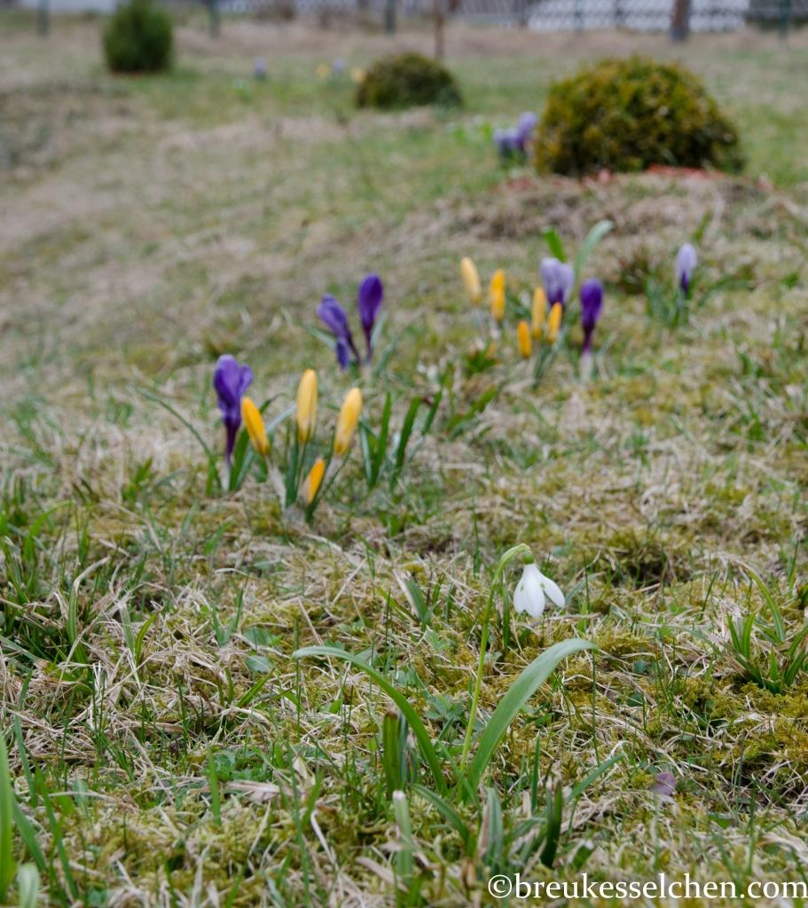 Erste Frühlingsboten im Garten