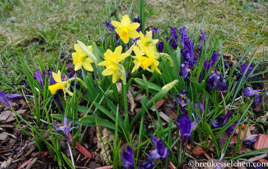 Frühlingsboten (3)
