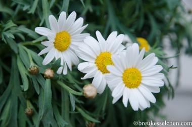 Frühlingsboten (7)