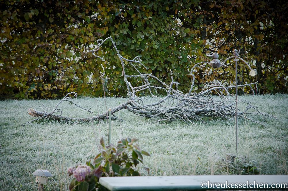 Herbsteindrücke Oktober (12)